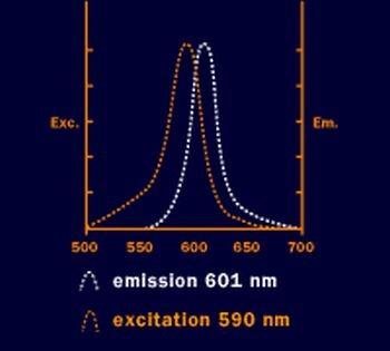5-ROX (5-Carboxy-X-rhodamin) - reines Isomer
