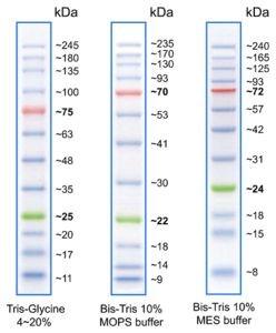 Prestained Protein Marker - 10-245 kDa