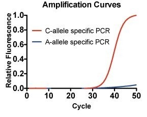 SNP-Pol_amplification-curves