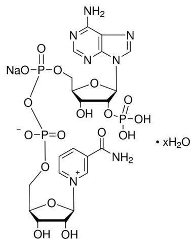 Nicotinamide adenine dinculeotide phosphate - NADP Na-salt