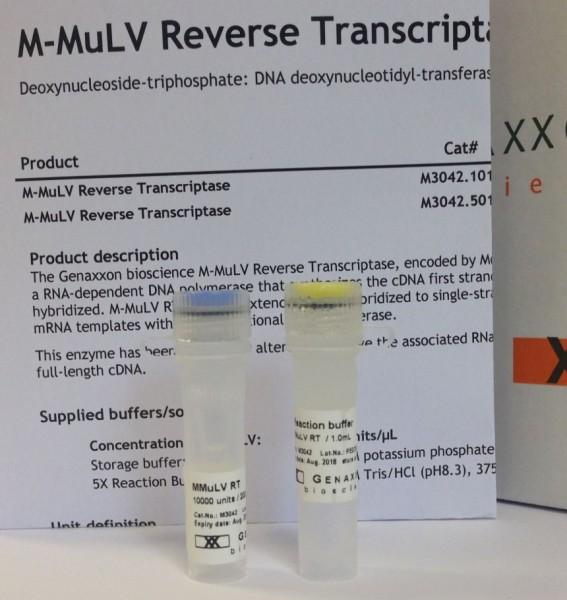 M-MuLV Reverse Transkriptase RNase H negativ
