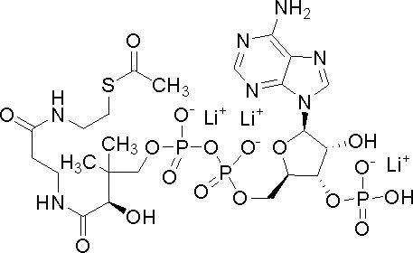 Acetyl-Coenzym A