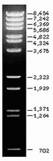 Lambda-DNA - BstE II DNA Marker