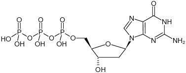 2'-Deoxyguanosine 5'-triphosphate - dGTP