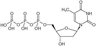 2'-Deoxythymidine 5'-triphosphate - dTTP