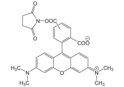 5/6-Carboxytetramethylrhodamine NHS ester