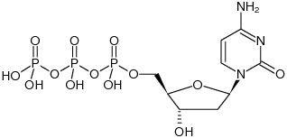 2'-Deoxycytidine 5'-triphosphate - dCTP