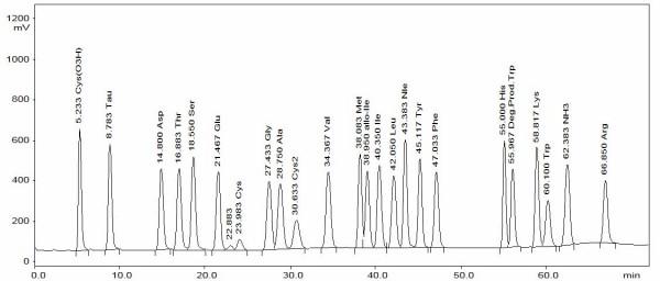 amino acid analysis chromatogramm