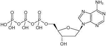 2'-Deoxyadenosine 5'-triphosphate - dATP