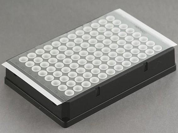 qPCR adhesive plate seals