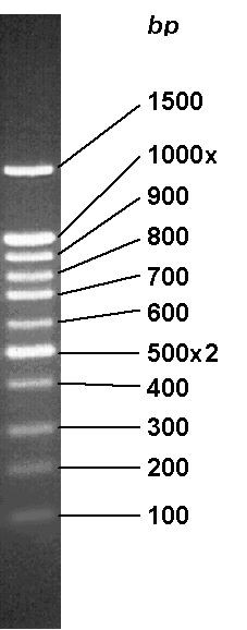 GenLadder 100 bp + 1.5 kbp (ready-to-use) DNA-Marker