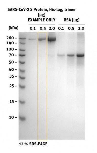 Trimeric SARS-CoV-2 S Protein - SDS PAGEsars cov_2 trimeric_sds
