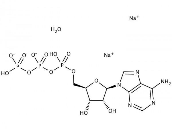 ATP - Adenosine-5'-triphosphate