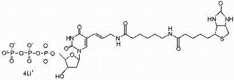 Biotin-11-dUTP Lösung, min. 96% (1mM)