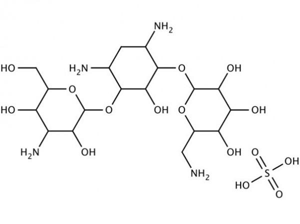 Kanamycin sulfate 10 mg/mL